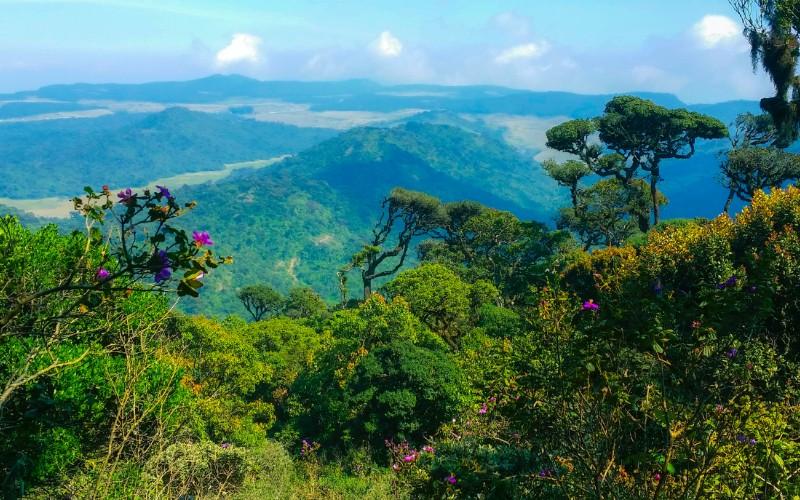 Jour 8 : Nuwara Eliya – Horton Plains